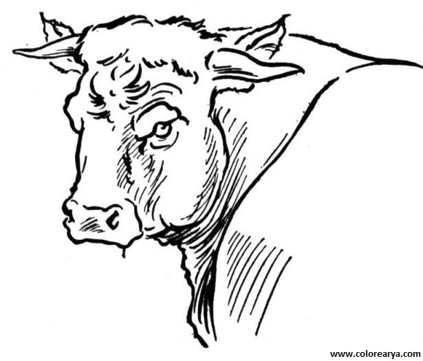 Toros dibujos para colorear - Imagui