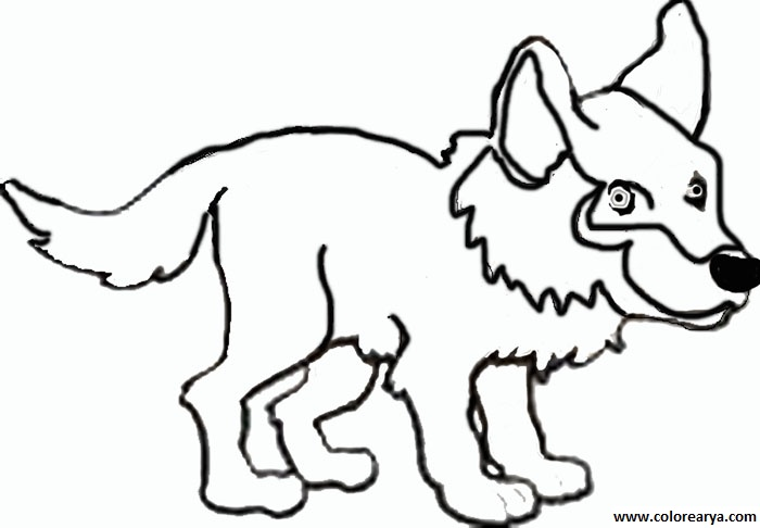 how to draw a wolf pup for kids