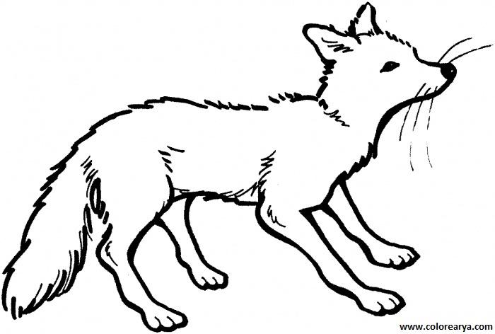 Dibujo para colorear de un zorro - Imagui